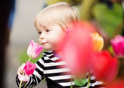 Little boy sniffing on tulip flowers
